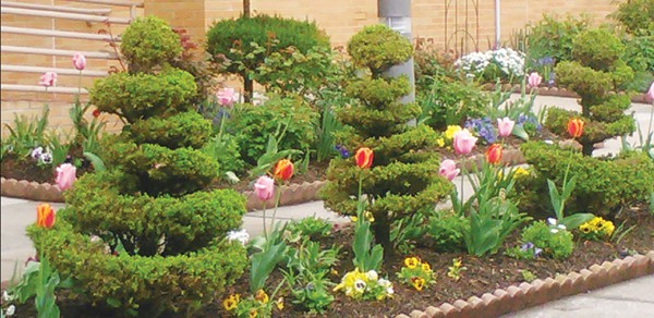 How To Start A Home Garden May 11 The Amboy Guardian